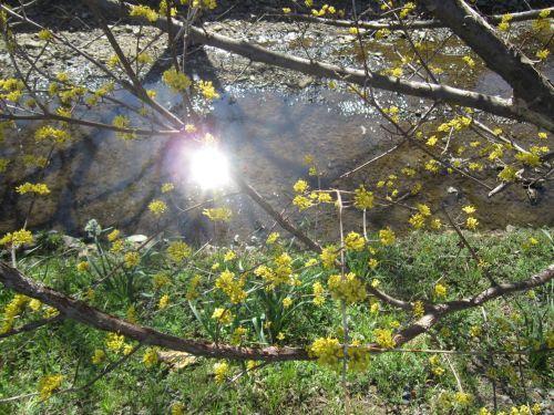 春のひざし_e0264942_17021480.jpg
