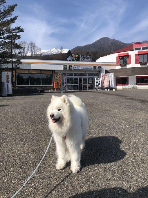 2020年冬 群馬~岐阜~石川県旅行 その1_f0128542_01503168.jpg