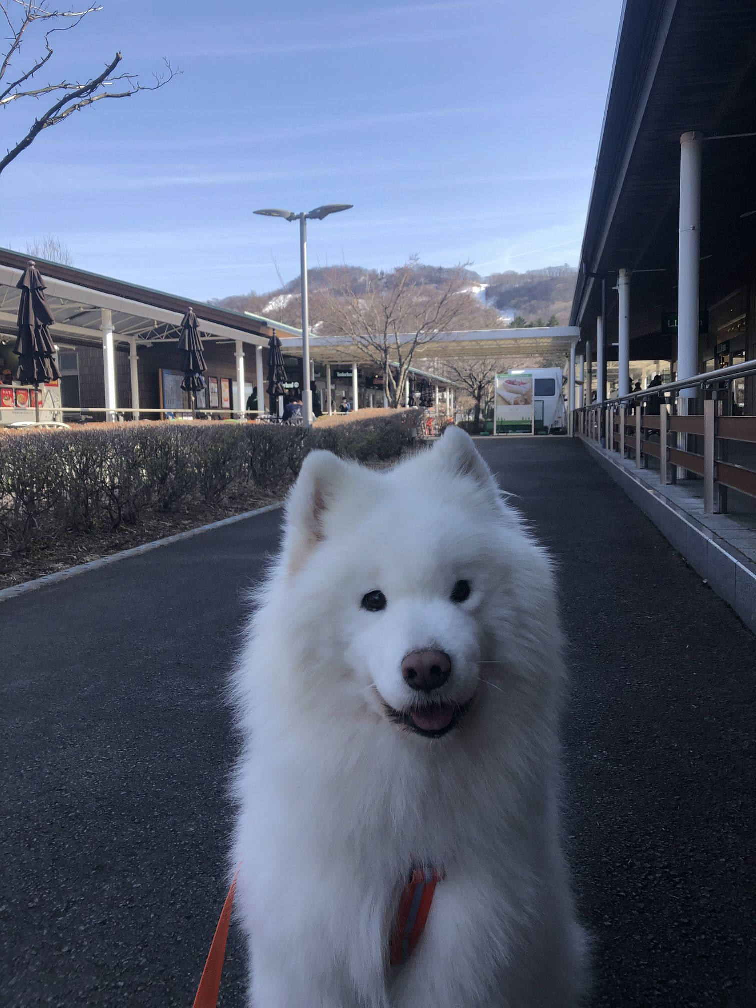 2020年冬 群馬~岐阜~石川県旅行 その1_f0128542_01525908.jpg