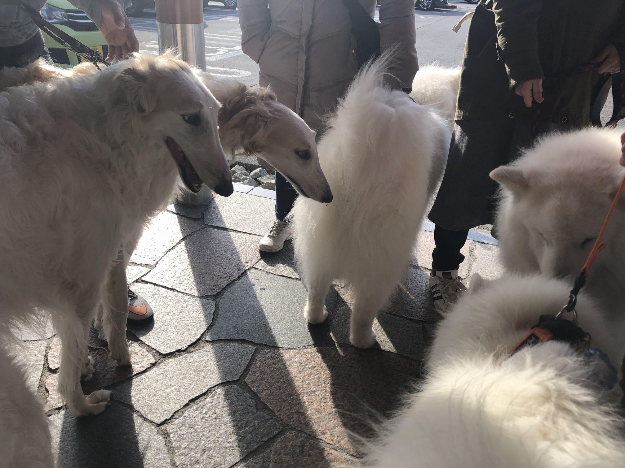 2020年冬 群馬~岐阜~石川県旅行 その1_f0128542_01564471.jpg