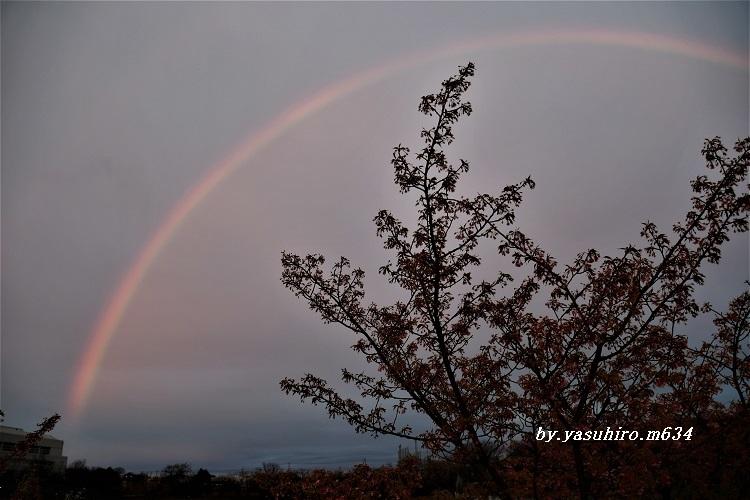 The・Rainbow_b0343543_19171766.jpg