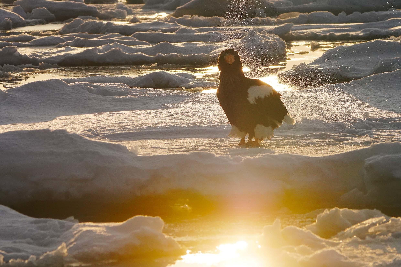 冬の道東行ってきました#1流氷のオオワシ_b0346055_11312654.jpg