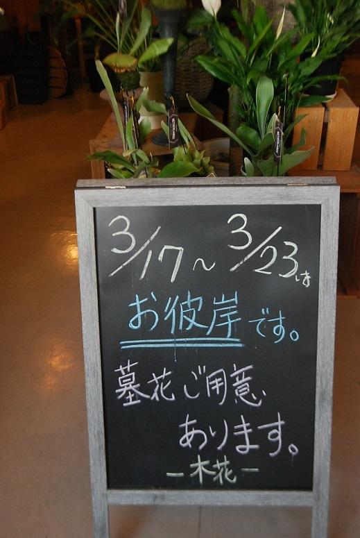蘭のご用意あります。_a0201358_17051599.jpg