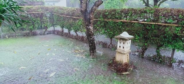 今季一番の大雨_d0083068_07460507.jpg