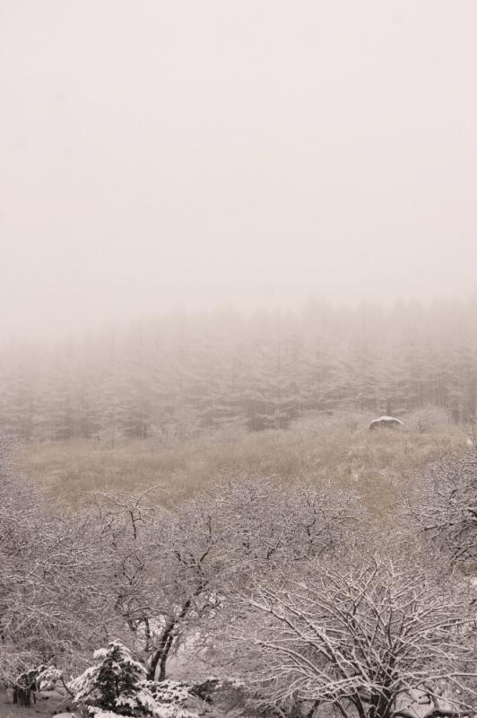 3月8日 雪_f0235376_10580003.jpg