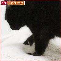 猫のもみもみ_a0389088_05461395.jpg