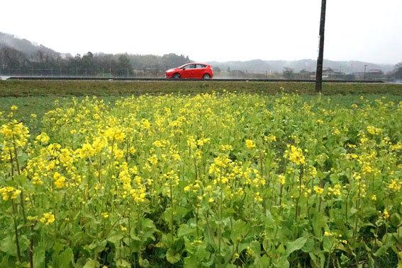 春の雨_b0145296_09515837.jpg