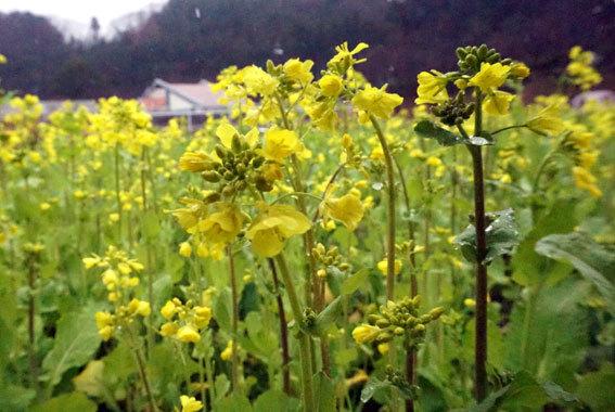 春の雨_b0145296_09520187.jpg