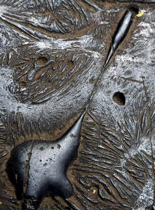 北区のカラミ煉瓦_f0173596_22554966.jpg
