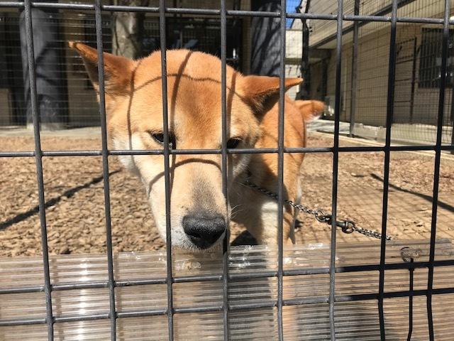 【犬猫・移動先募集】センター(本所)収容(3/6訪問)_f0242002_20401848.jpg