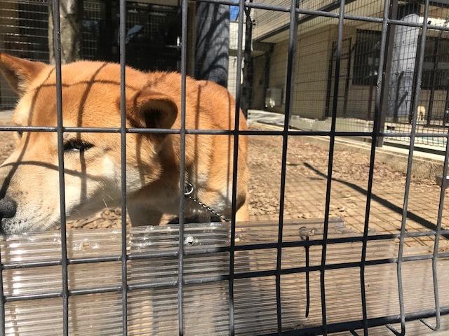 【犬猫・移動先募集】センター(本所)収容(3/6訪問)_f0242002_20402603.jpg