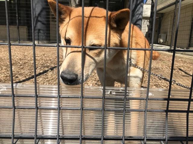 【犬猫・移動先募集】センター(本所)収容(3/6訪問)_f0242002_20403382.jpg