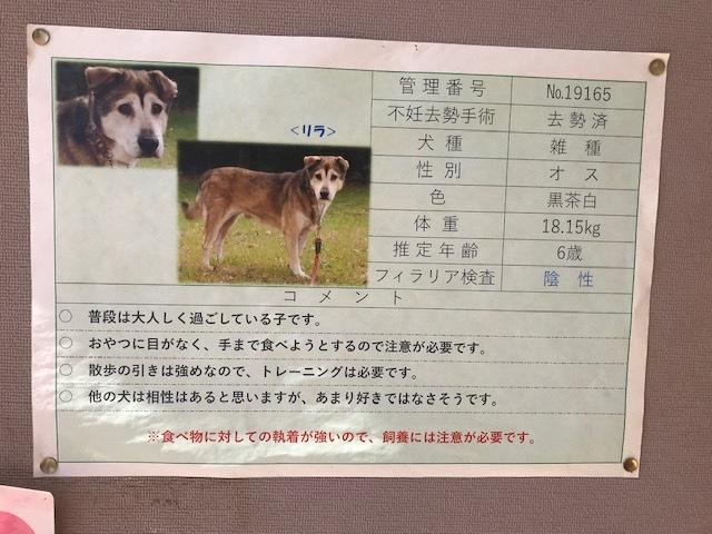 【犬猫・移動先募集】センター(本所)収容(3/6訪問)_f0242002_20404131.jpg
