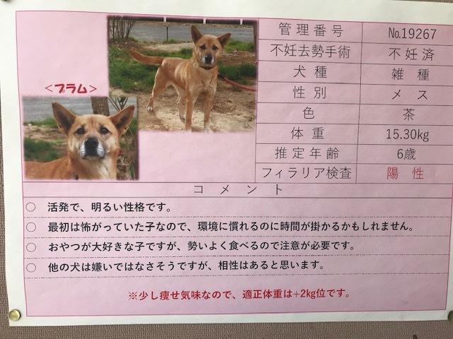 【犬猫・移動先募集】センター(本所)収容(3/6訪問)_f0242002_20415163.jpg