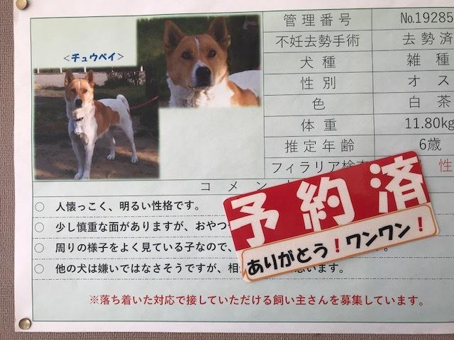 【犬猫・移動先募集】センター(本所)収容(3/6訪問)_f0242002_20440098.jpg