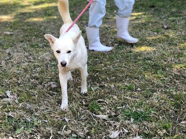 【犬猫・移動先募集】センター(本所)収容(3/6訪問)_f0242002_20470209.jpg