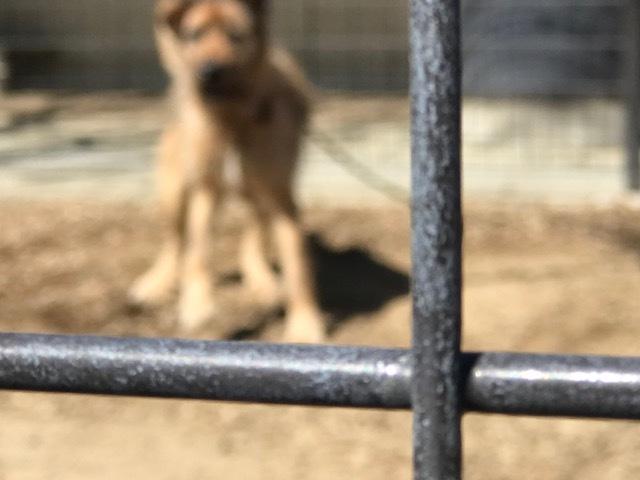 【犬猫・移動先募集】センター(本所)収容(3/6訪問)_f0242002_20522234.jpg