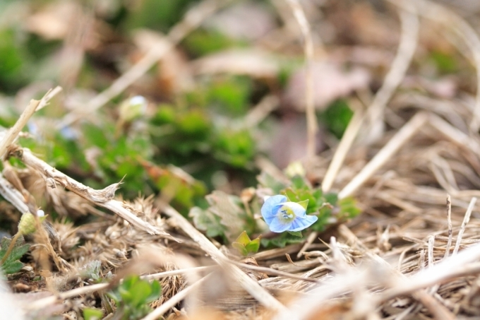 待ち遠しい春_f0091207_16565691.jpg