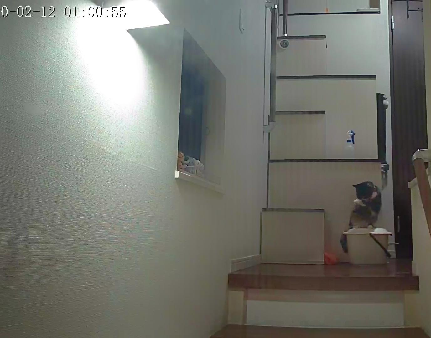 風鈴監視カメラ画像と直視画像と、マヨに期待_e0144012_16434390.jpeg