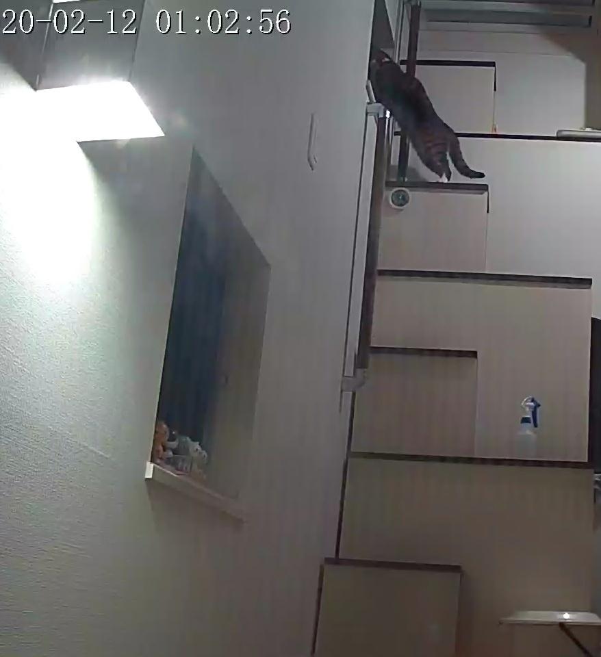 風鈴監視カメラ画像と直視画像と、マヨに期待_e0144012_16482552.jpeg