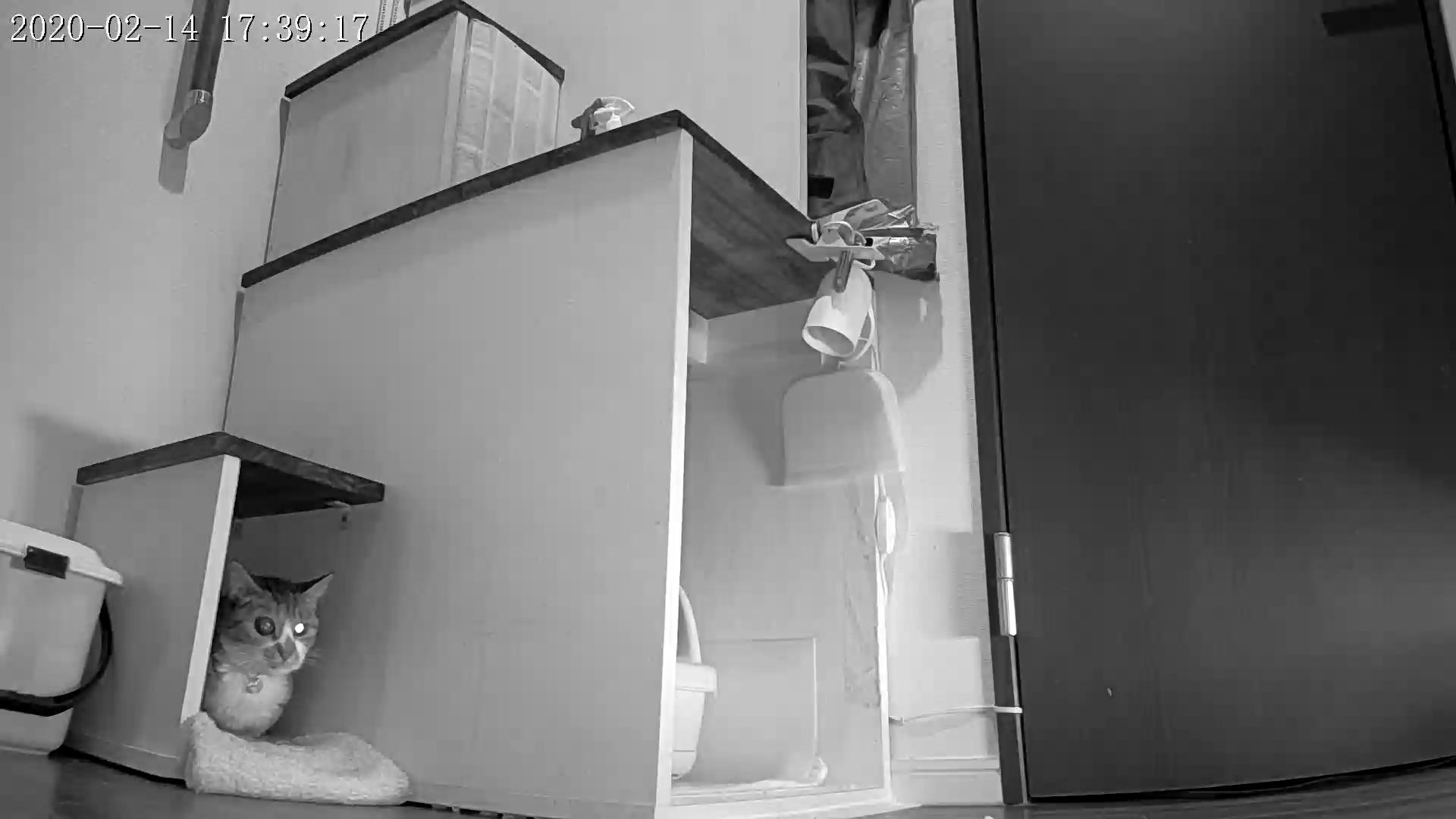 風鈴監視カメラ画像と直視画像と、マヨに期待_e0144012_16591266.jpg