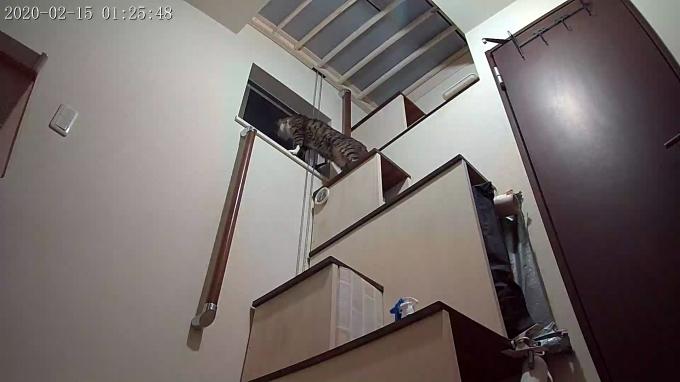 風鈴監視カメラ画像と直視画像と、マヨに期待_e0144012_17043427.jpg