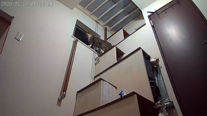 風鈴監視カメラ画像と直視画像と、マヨに期待_e0144012_17045714.jpg