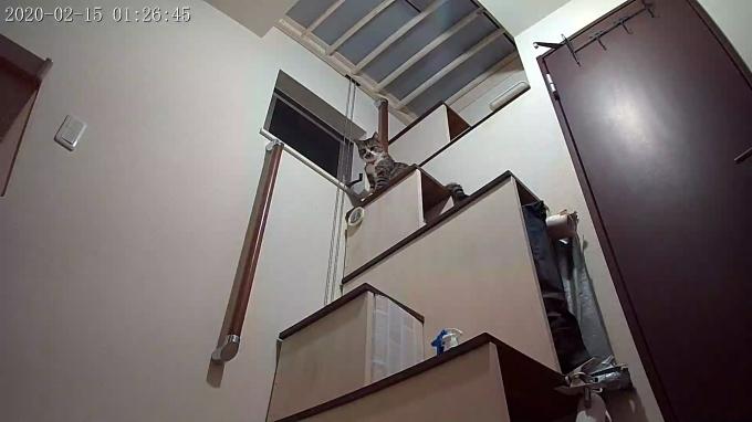 風鈴監視カメラ画像と直視画像と、マヨに期待_e0144012_17061448.jpg