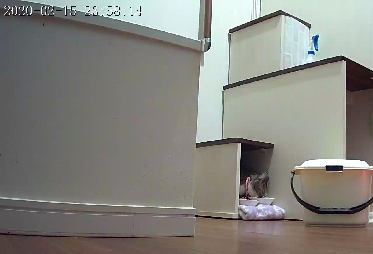 風鈴監視カメラ画像と直視画像と、マヨに期待_e0144012_20533528.jpeg