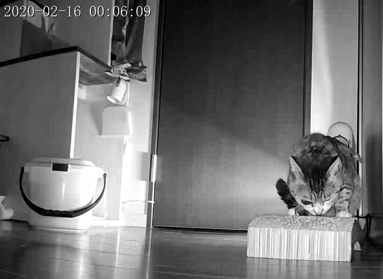 風鈴監視カメラ画像と直視画像と、マヨに期待_e0144012_21020048.jpeg