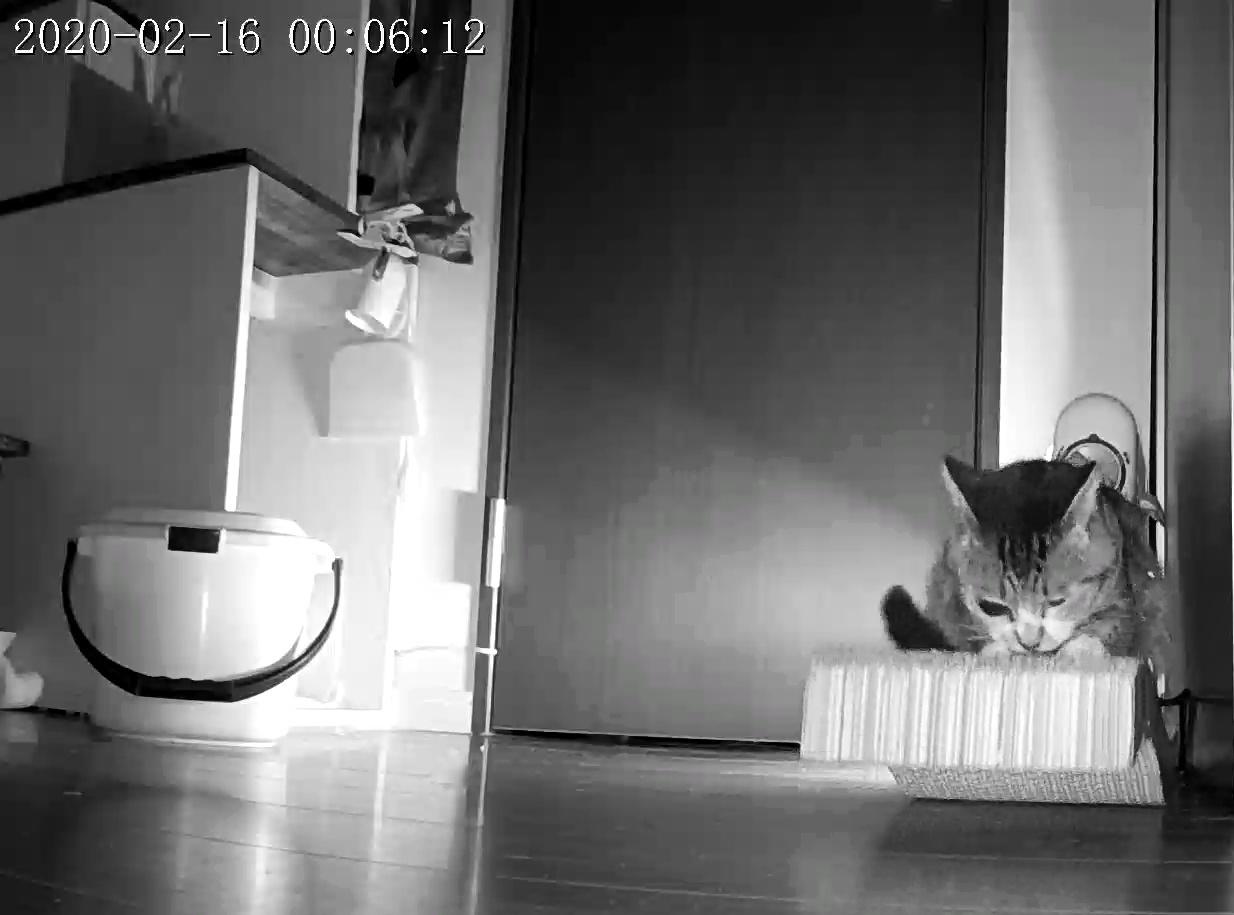 風鈴監視カメラ画像と直視画像と、マヨに期待_e0144012_21024267.jpeg