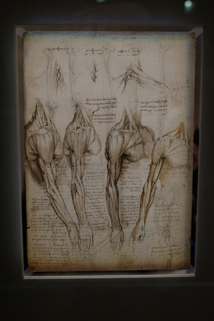 ルーヴル美術館 レオナルドダヴィンチ展 Vol2 観察と分析_f0050534_07352313.jpg