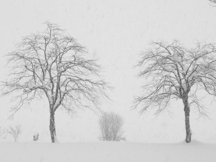 雪が降る 六日町 新潟_f0050534_08041598.jpg