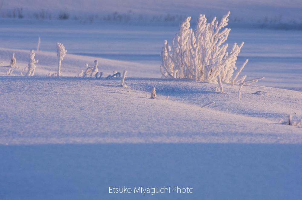 枯れ草も凍る朝_f0152939_16381438.jpg