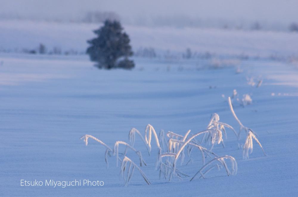 枯れ草も凍る朝_f0152939_16383158.jpg