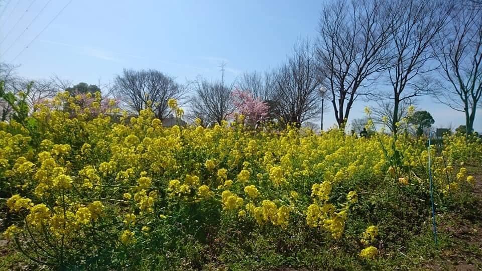 農業文化園・戸田川緑地へ行ってきました♪_f0373339_13114079.jpg
