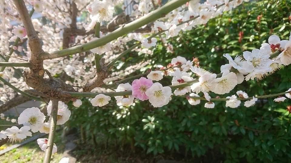 農業文化園・戸田川緑地へ行ってきました♪_f0373339_13135227.jpg