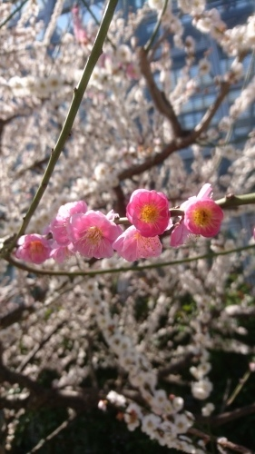 農業文化園・戸田川緑地へ行ってきました♪_f0373339_13281018.jpg