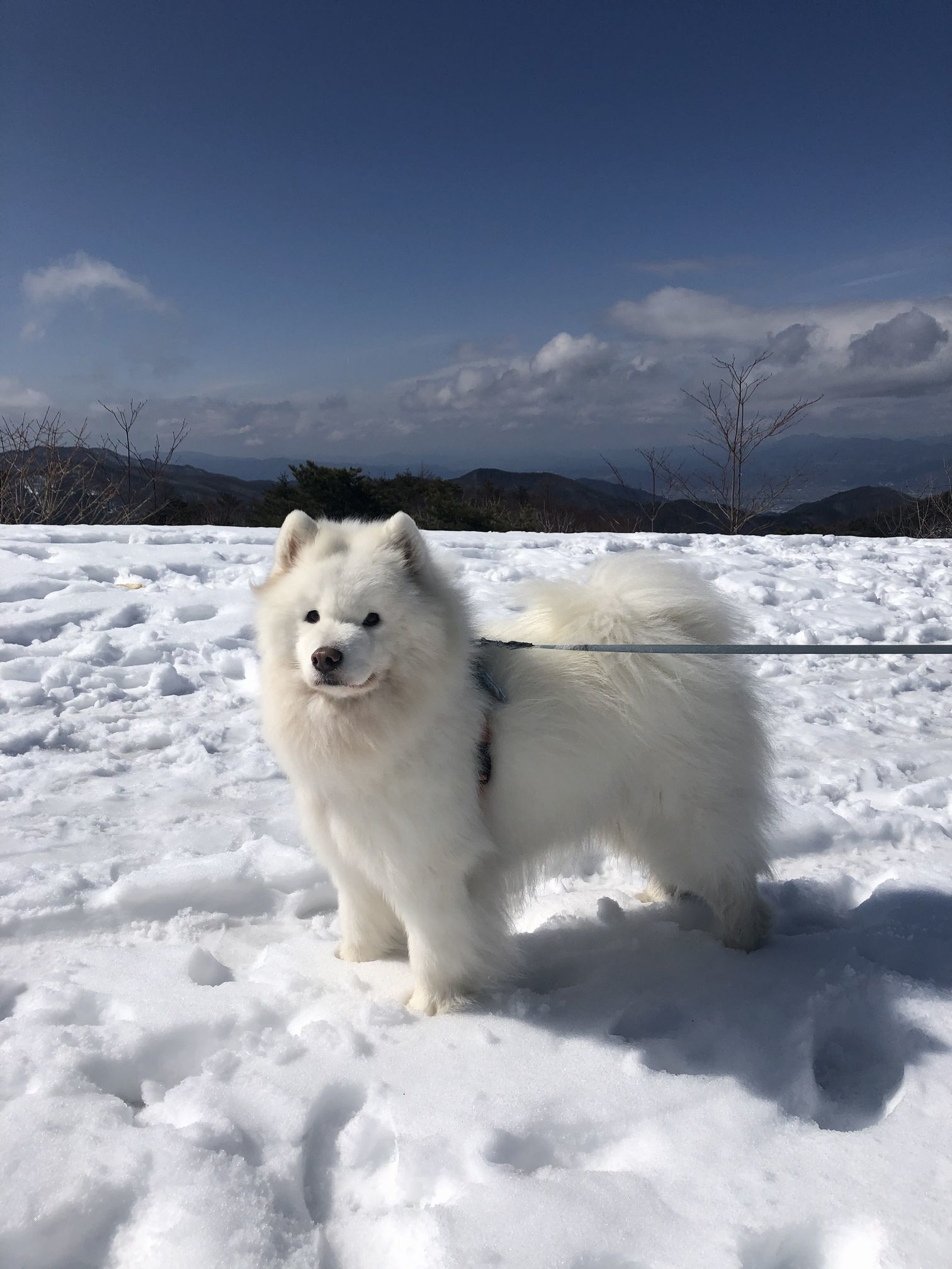 2020年冬 群馬~岐阜~石川県旅行 その2_f0128542_00460303.jpg