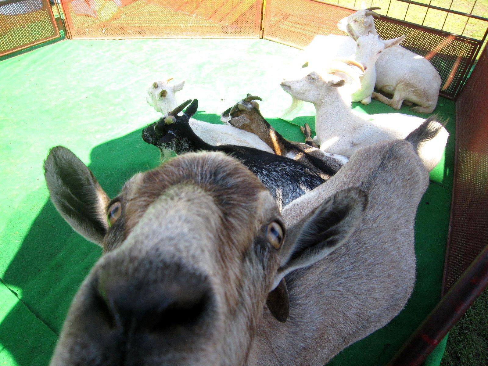 いちご動物園年間スケジュール【当面中止のお知らせ】_c0141652_11145955.jpg