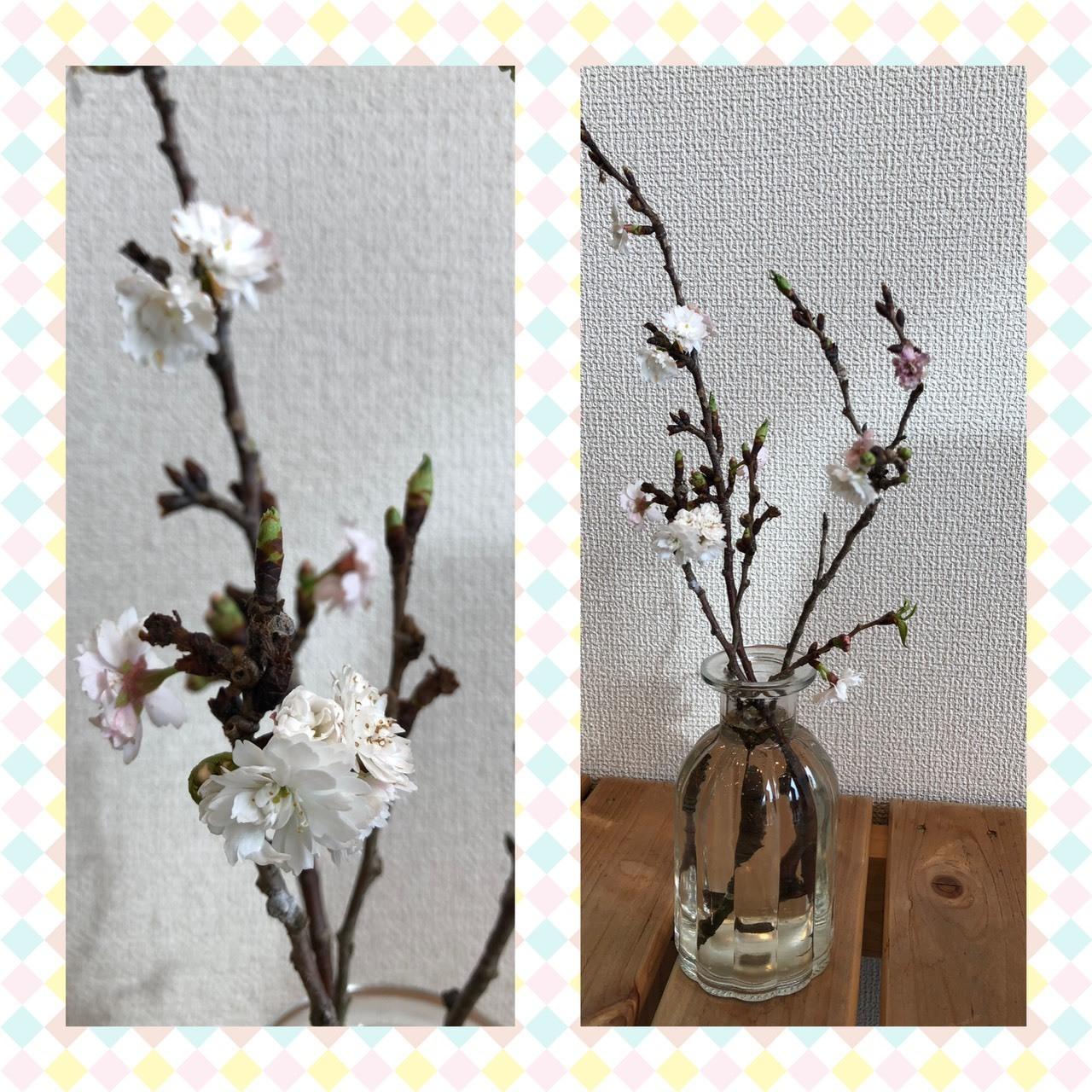 桜_b0328361_22141079.jpg