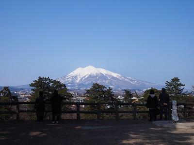 弘前公園のマルバマンサク_2020.03.08_d0131668_10231033.jpg