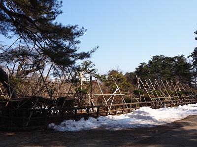 弘前公園のマルバマンサク_2020.03.08_d0131668_10235223.jpg