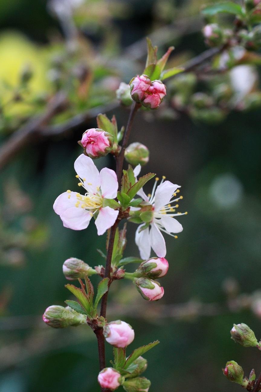 夢の中で ~今春の花見~_a0107574_17082744.jpg