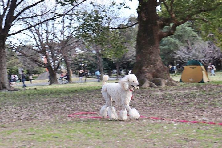 いつもの公園だけどいつもの公園じゃない感じ。_b0111376_14495525.jpg