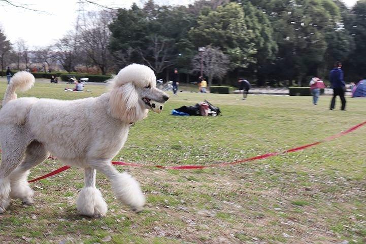 いつもの公園だけどいつもの公園じゃない感じ。_b0111376_14550869.jpg