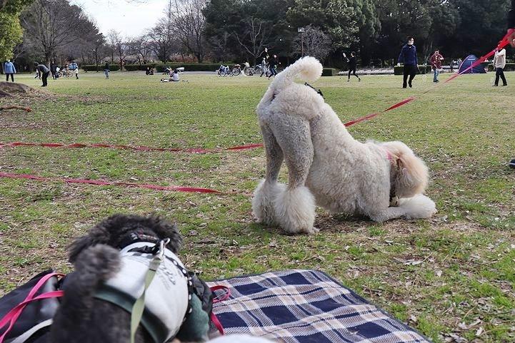 いつもの公園だけどいつもの公園じゃない感じ。_b0111376_15015387.jpg