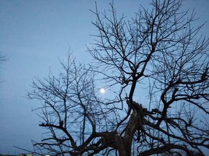 もうすぐ満月かな。_b0126182_23431778.jpg