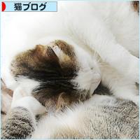 遺された猫_a0389088_17524722.jpg