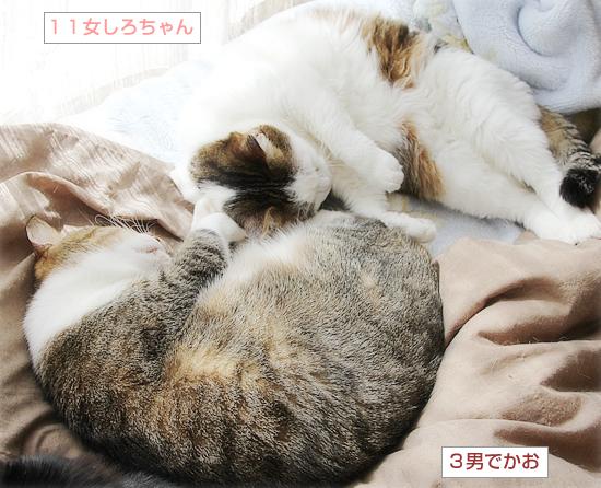 遺された猫_a0389088_17524760.jpg